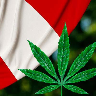 curso: uso médico del cannabis medicinal