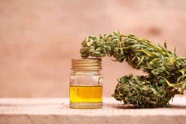 decodificando el cannabis