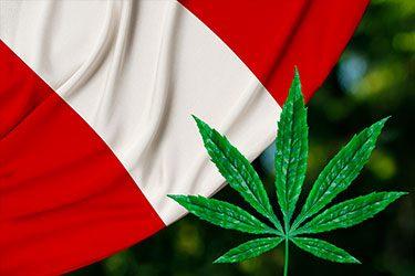 cannabis-medicinal-en-peru