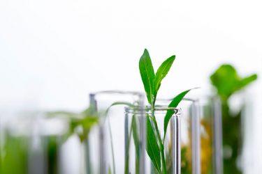 cannabis-wonder-crop